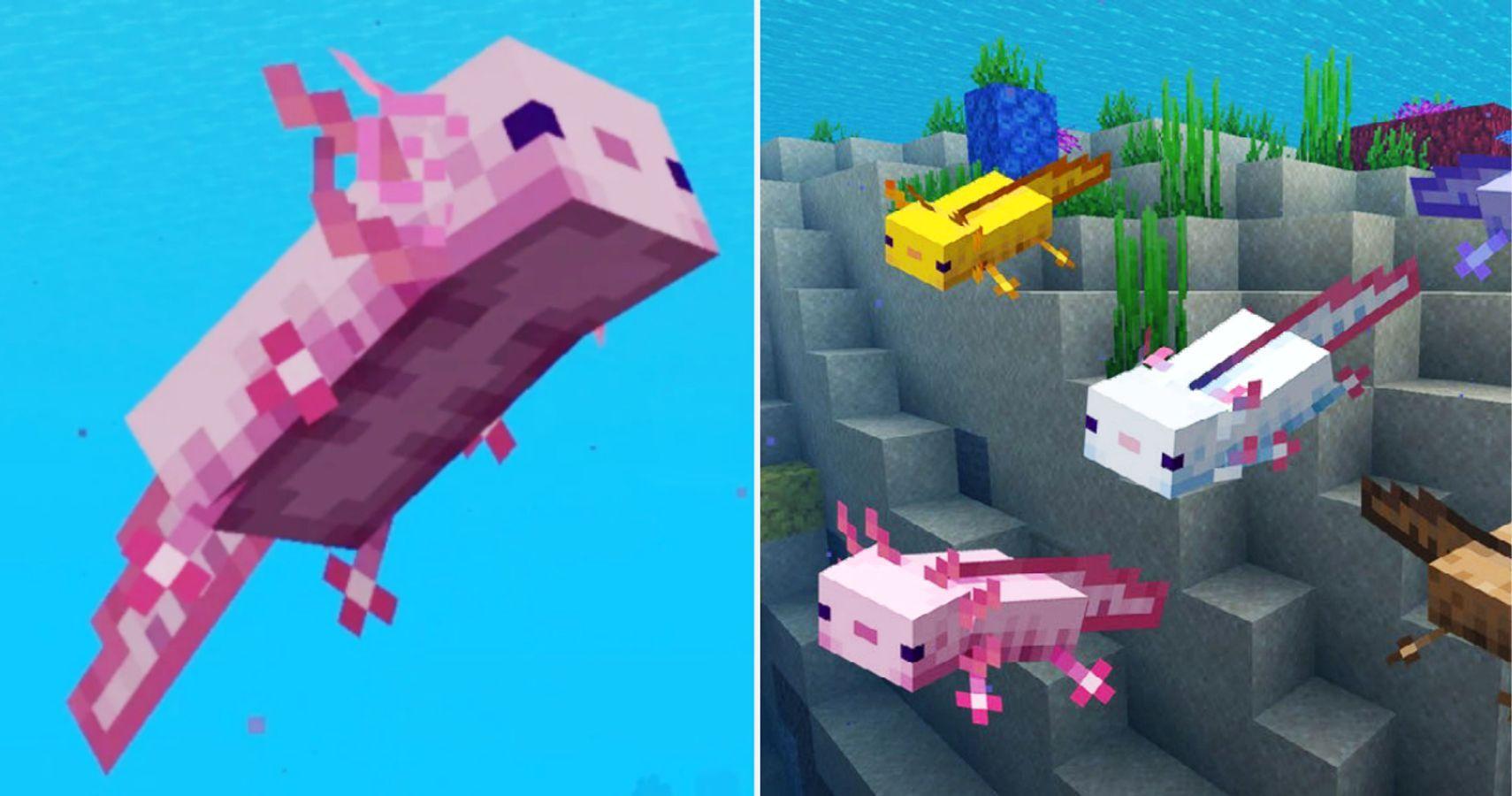 Minecraft: todo lo que necesitas saber sobre los ajolotes