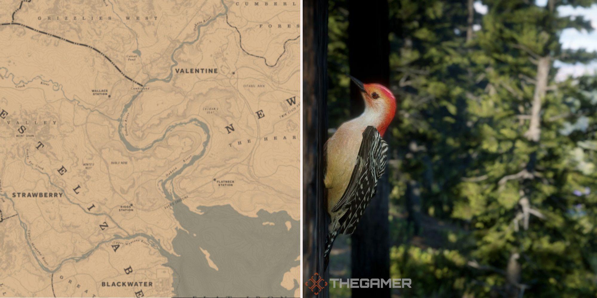 Red Dead Online: las mejores ubicaciones de caza de pájaros carpinteros