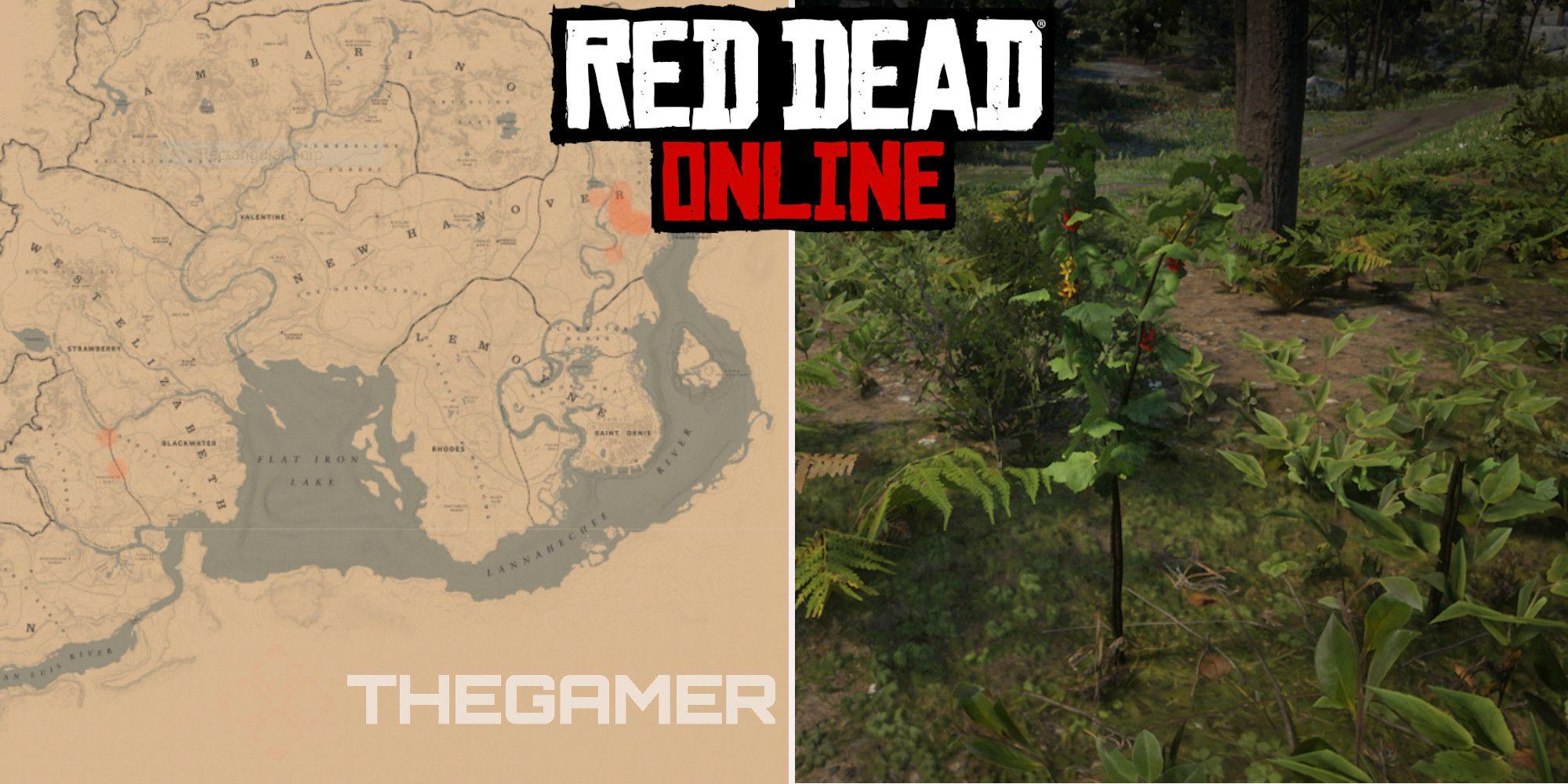 Red Dead Online: las mejores ubicaciones de recolección de grosellas doradas