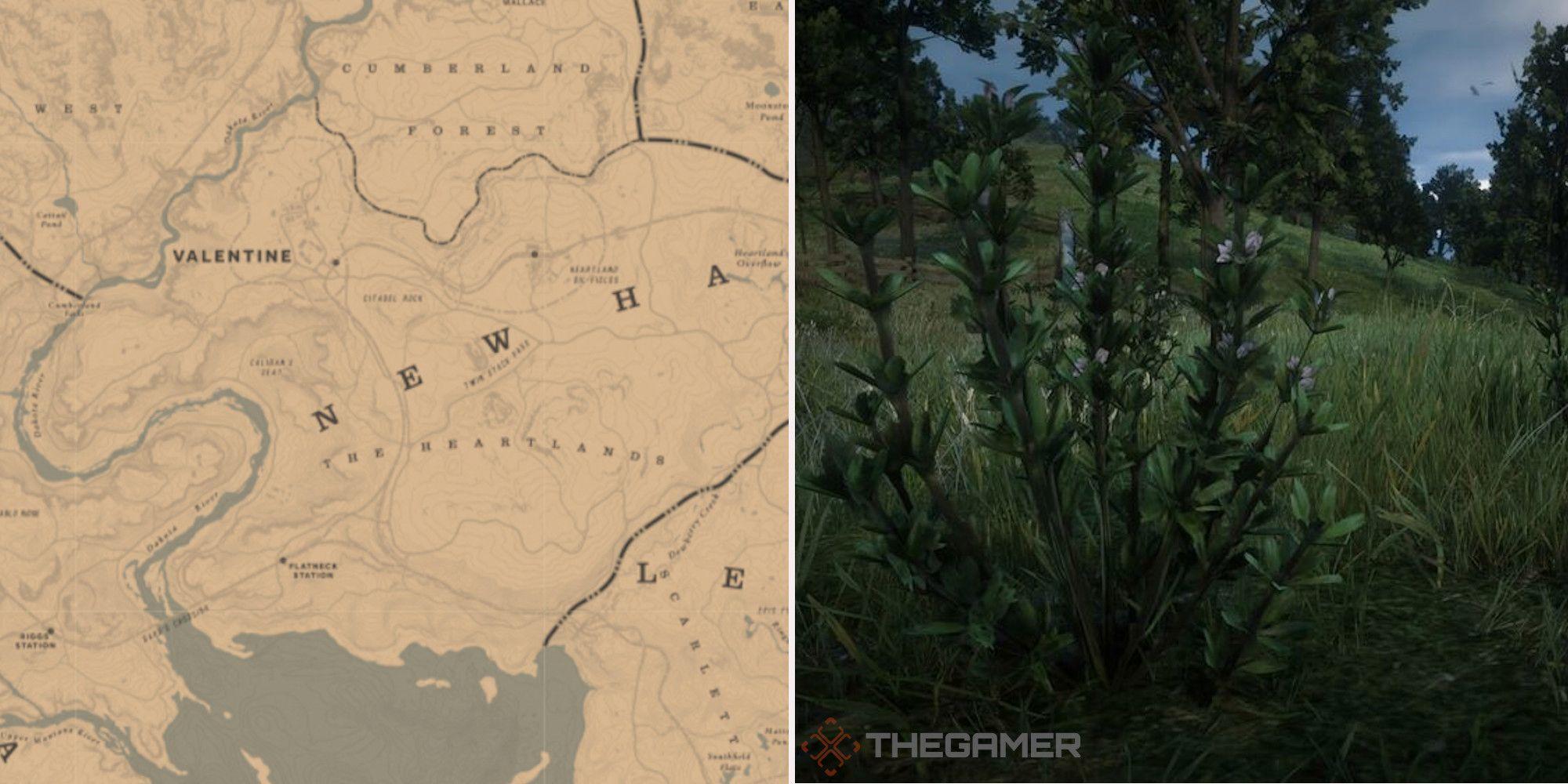 Red Dead Online: las mejores ubicaciones de tomillo rastrero
